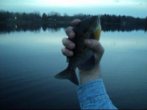 Pure Michigan Spring Bluegill Fishing