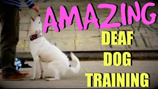 This deaf Border Collie and his trainer are perfectly in sync!