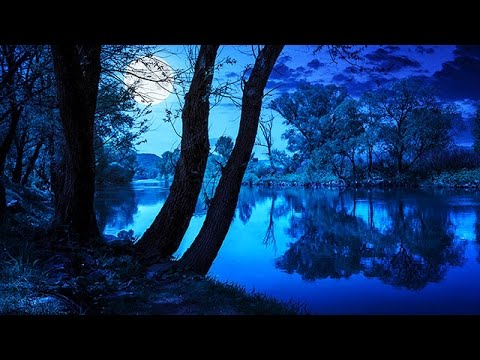 Soothing Night Time Forest Sounds - 2 Hour Ambient Soundscape - For Sleep & Relaxation