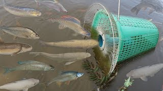 Video Creative Girl Make Fish Trap Using PVC - Fan Guard -  Basket To Catch A Lot of Fish MP3, 3GP, MP4, WEBM, AVI, FLV Oktober 2017