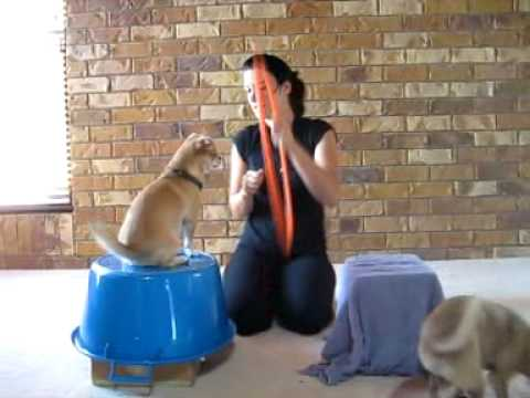 CAT Trick Training – EXTREMELY COOL!