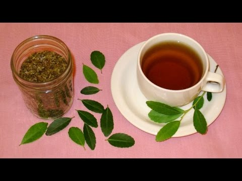 Harvest, Roast and Brew a Green Tea at Home