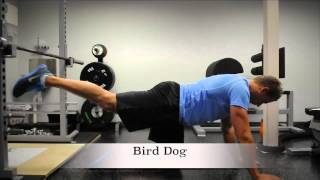 Exercise Index: Bird Dog