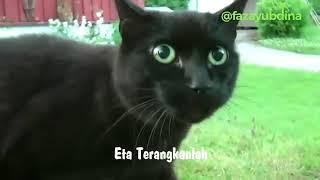 Kucing lagi nya etaterangkanlah