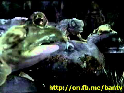 Banned Commercials - Budweiser Frogs & Chameleons Get Canned