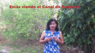 CANAL: https://www.youtube.com/user/roylenisVER BLOG: http://prosaludybellezanaturalnatural.blogspot.com/INSTAGRAM: http://instagram.com/ruty2001FANS PAGE: https://www.facebook.com/CanalRoylenis?ref=hl