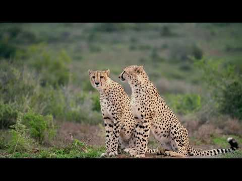 Kwandwe Private Game Reserve - South Africa