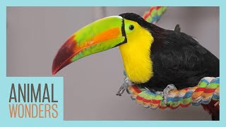 Our Toucan Gets Surgery! by Animal Wonders