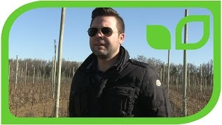 Redlove-Anbau in Südfrankreich (französisch)