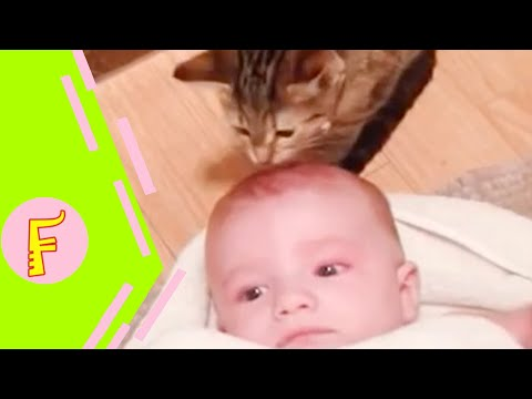 Baby And Cat Fun And Cute #4 - Funny Baby Videos