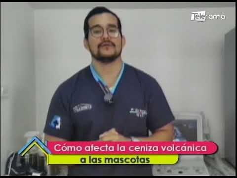 Cómo afecta la ceniza volcánica a las mascotas