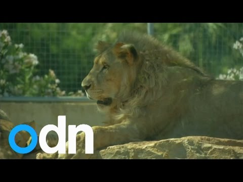 Greece's zoo animals affected by controls