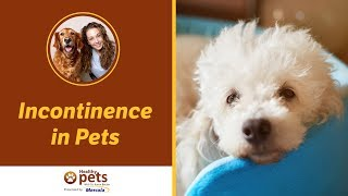 Dr. Karen Becker Discusses Incontinence in Pets