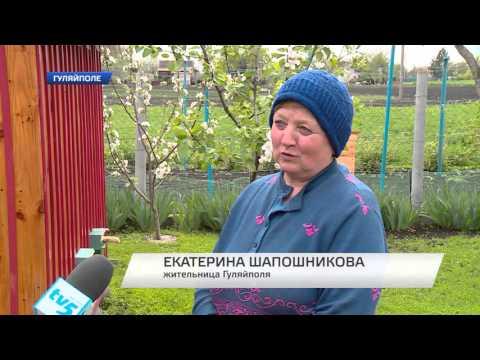 Житель Гуляйполя сам зробив спеціальний міні-будиночок для бджіл (відео)