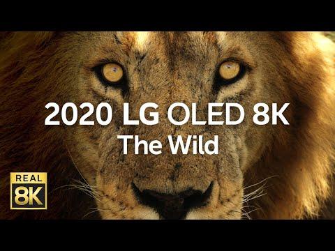 2020 LG OLED 8K l  The Wild 8K HDR 60fps