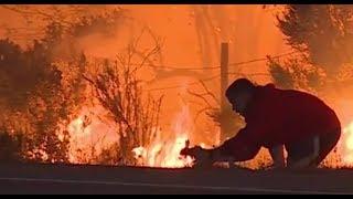 Guy Saves Wild Rabbit from Wild Fire in Ventura County California - Risks Own Life - Animal Hero!