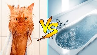 Cats Vs Water - Cats Falling In Water - Funny Cats 2016 - Funny Cat Bathing Compilation Part 2