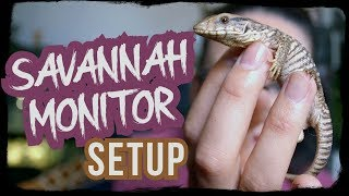 BABY SAVANNAH MONITOR SETUP by Jossers Jungle