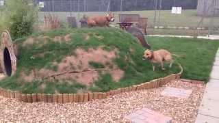 ONG cria jardim para cães a espera de um lar