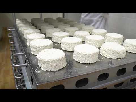 О производстве молочной продукции