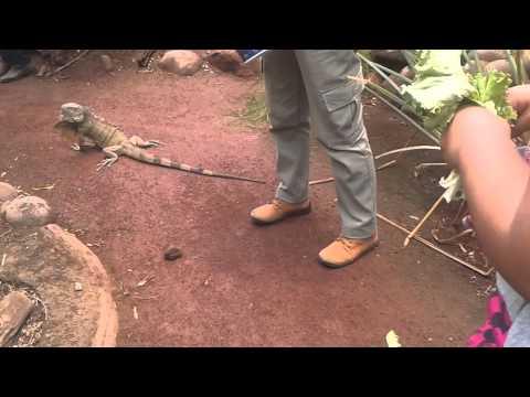Movimiento de las Iguanas