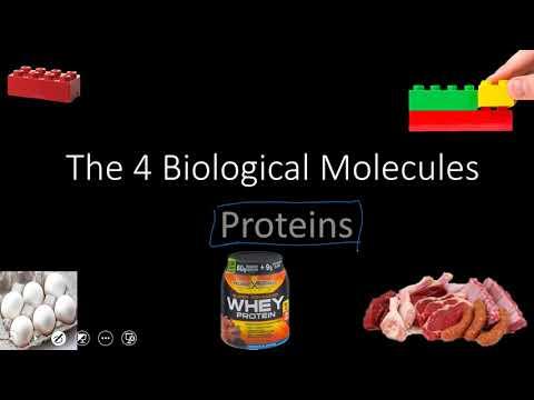 Lipids & Proteins