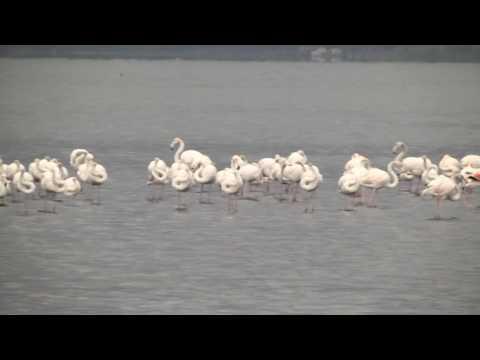 Flamingolar ve binlerce  su kuşunun uğrak yeri oldu