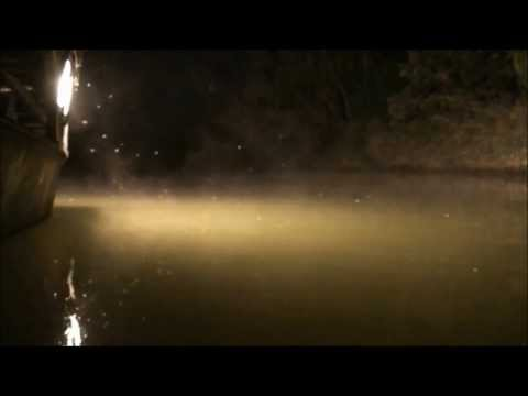 Bowfishing 2013 HD