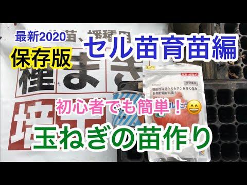 玉ねぎ種まきセル苗育苗編・最新 保存版 2020/8/31