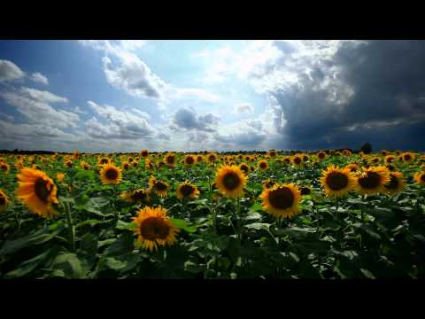 sunflowers - Play in the background while you work or study. Or use it for long relaxation sessions.