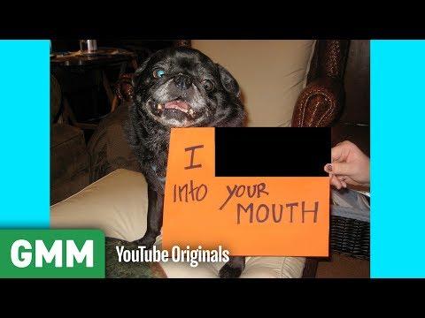 Name That Dog Shame (GAME)