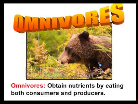 consumers - This video goes over the difference between producers and consumers. It will cover photosynthesis and chemosynthesis. In addition, this video discusses the d...