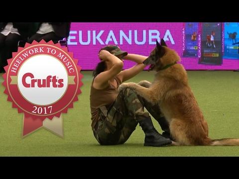 Chú chó đỉnh nhất của năm