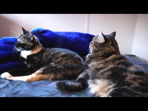 Ep 13 – Cat Care: How To Introduce Cats To Each Other
