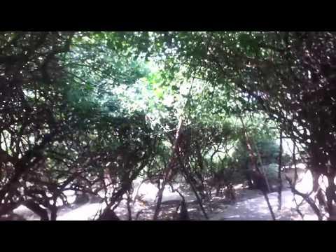 RARE VIDEO OF NIDHIVAN VARANDAVAN
