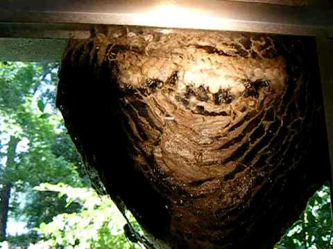 Inside The Hornets Nest