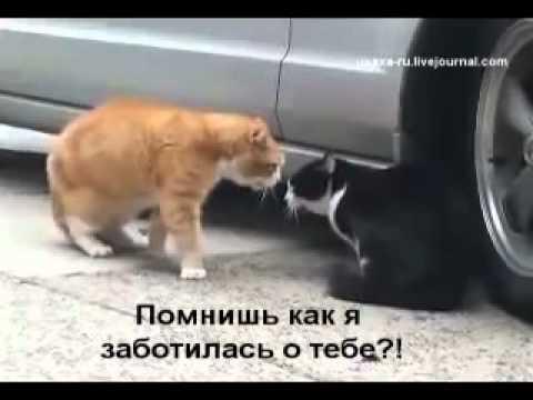 кошки видео приколы смотреть онлайн: