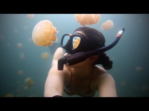 Lost in Jellyfish Lake