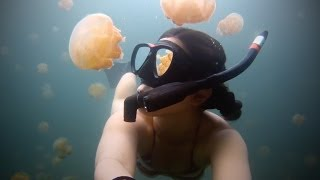 Girl Swimming In A Lake Full Of Millions Of Golden Jelly Fish