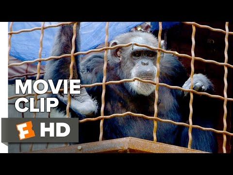 Unlocking the Cage Movie CLIP - Sign Language (2016) - Documentary HD