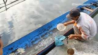 Takengon Indonesia  city photos : Ikan Depik Yang Hanya Ada di Takengon Indonesia