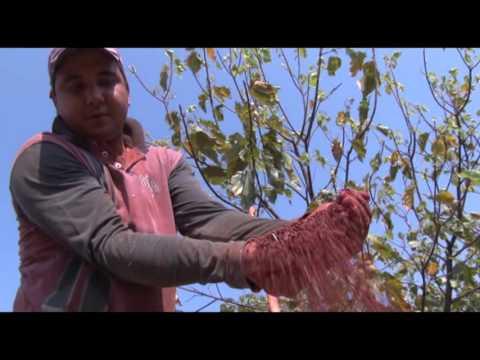 6  Associação produtores rurais ,industriais   São João do  Pau D Alho