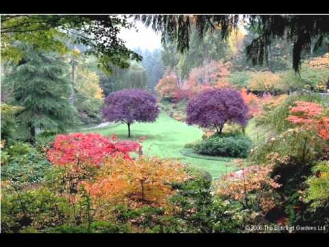 Beautiful Flower Garden Video