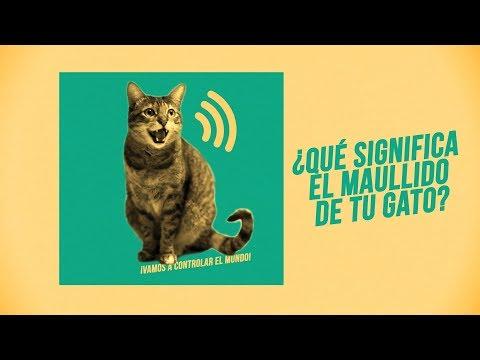¿Qué te quiere decir tu gato con su maullido? 🎶😸😾😿🎶 | ¡Hay 6 tipos de miaus! #ASMR 🔊