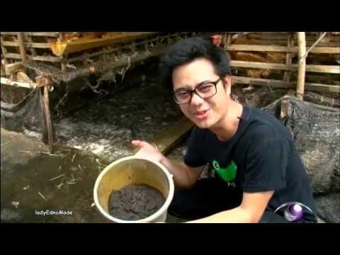การเลี้ยงปลาทอง