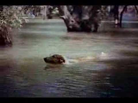 Lassie Come Home (1943) trailer Elizabeth Taylor