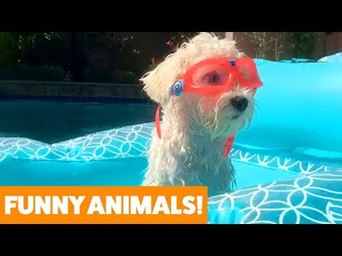 Funny animals - Funniest Pets & Animals of the Week  Funny Pet Videos