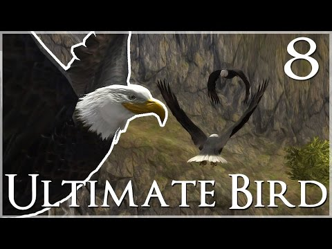 A Bear-y Wild Goose Chase!! 🐦 Ultimate Bird Simulator - Episode #8
