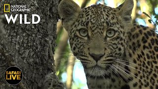 Safari Live - Day 332   Nat Geo Wild by Nat Geo WILD