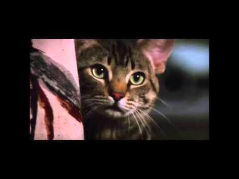Movie Spotlight: Cat's Eye (1985)